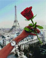 APK 24010 Роза Парижа