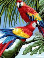 CX 3769 Попугаи