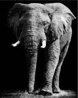 GX 37612 Слон
