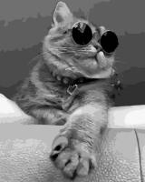 OK 10011 Кот в очках